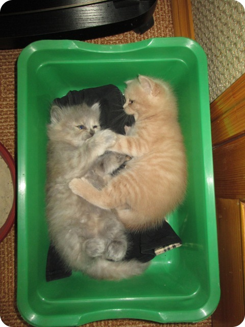 Маленькие котики-2